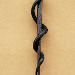 Hand-forged snake on a rod as a symbol of medicine